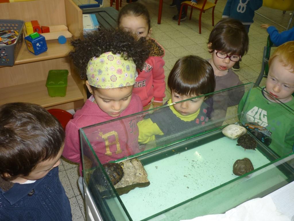 splich-et-plach-les-tortues
